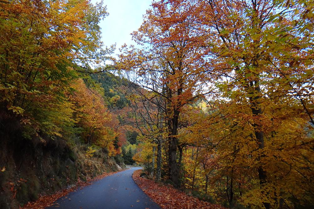 Os tons amarelo-avermelhados do outono dominam a estrada que leva ao hotel.