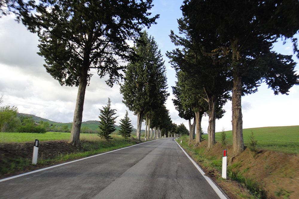 Os ciprestres, planta típica da região.