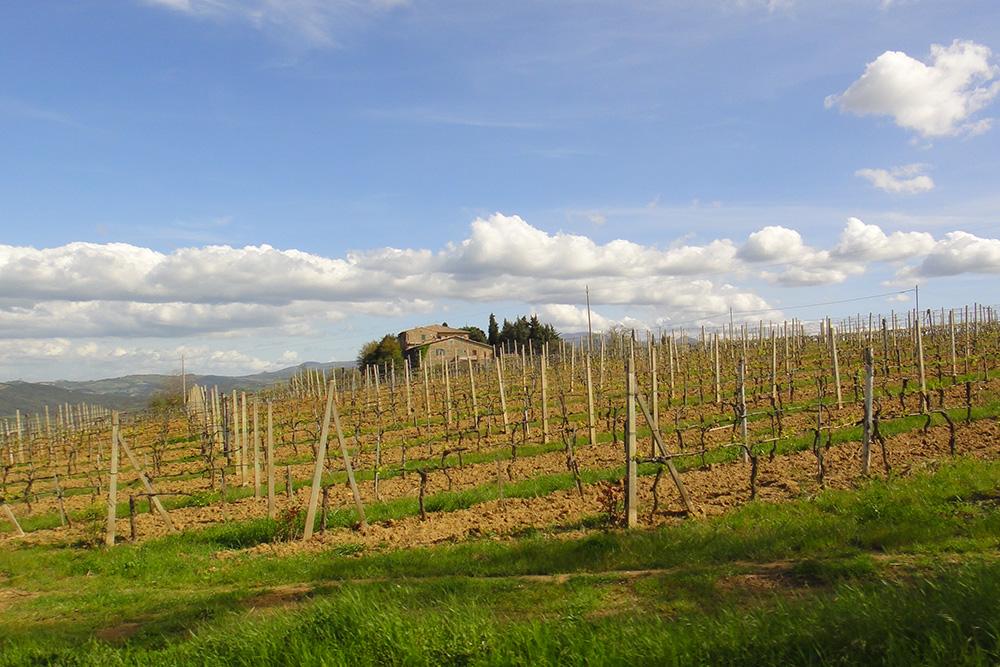 Na Toscana são produzidos os melhores vinhos da Itália.