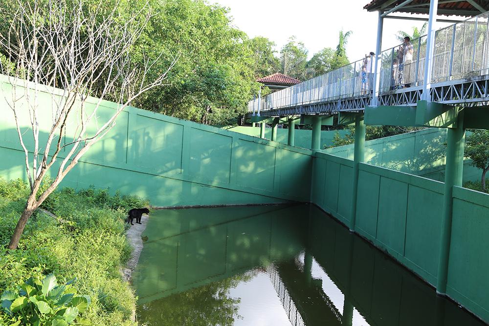 Zoo do Cigs, aberto à visitação