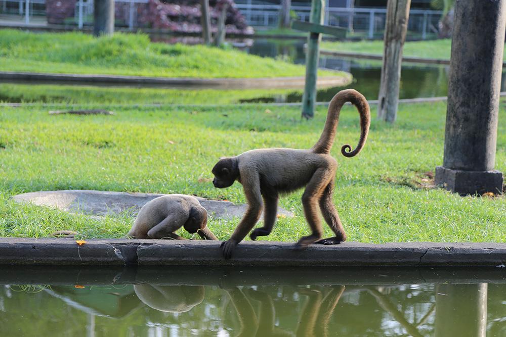 Zoológico do CIGS terá entrada gratuita no Dia das Crianças