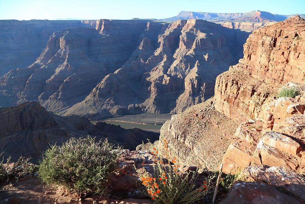 canyon 33