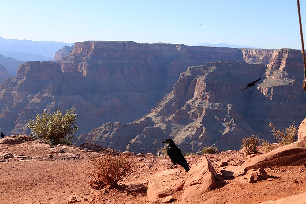 canyon13