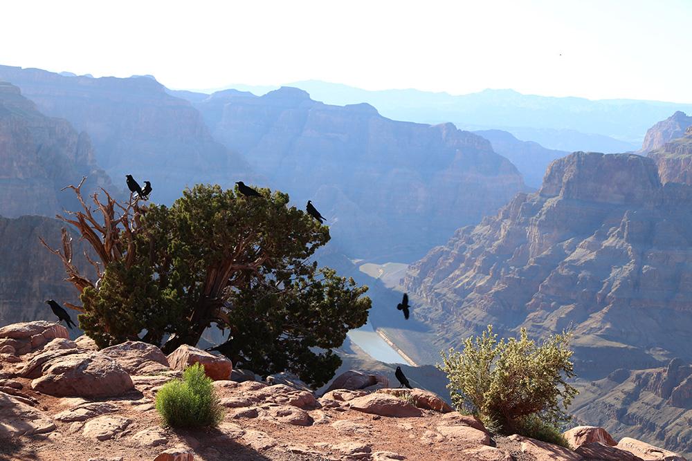 canyon23