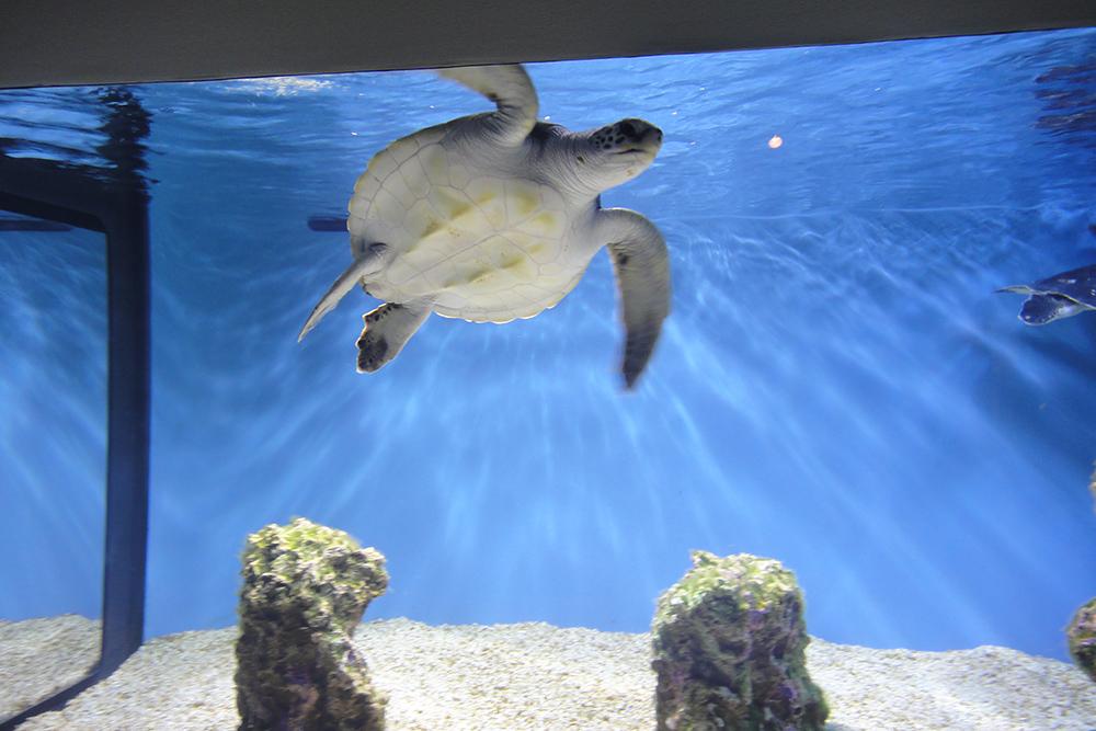 monterey aquarium 11