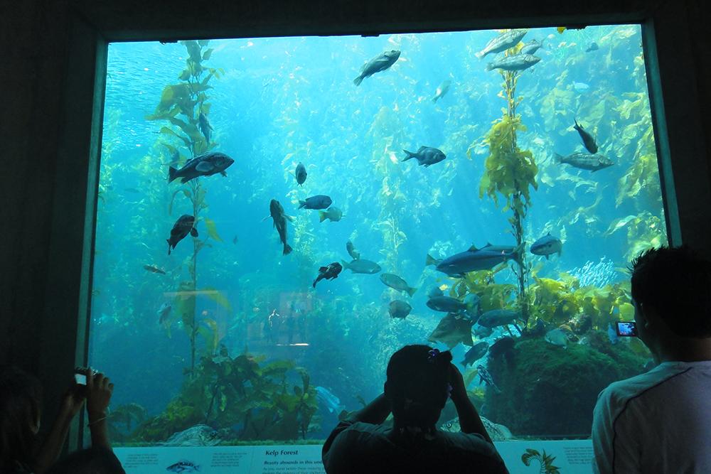 monterey aquarium 22