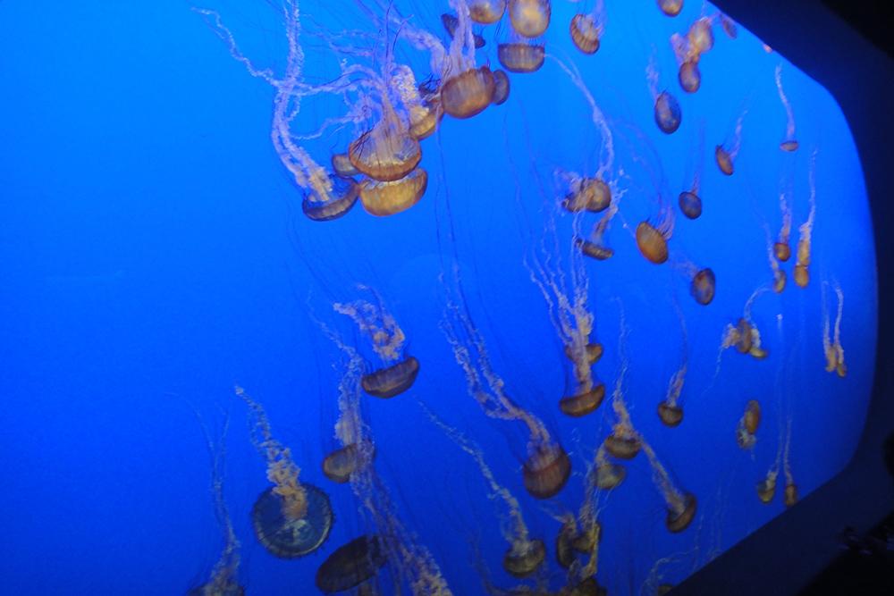 monterey aquarium 5