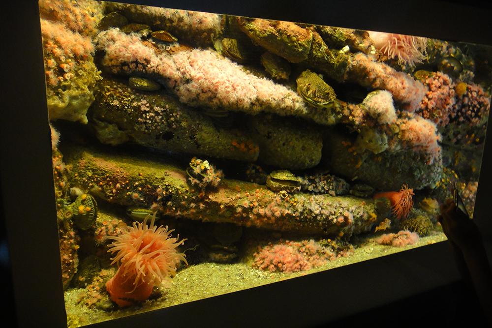 monterey aquarium 8