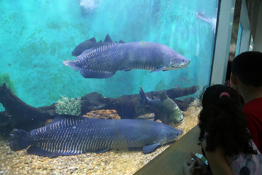 Zoológico do CIGS tem entrada gratuita nesta segunda