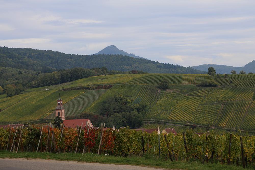Alsacia rota dos vinhos