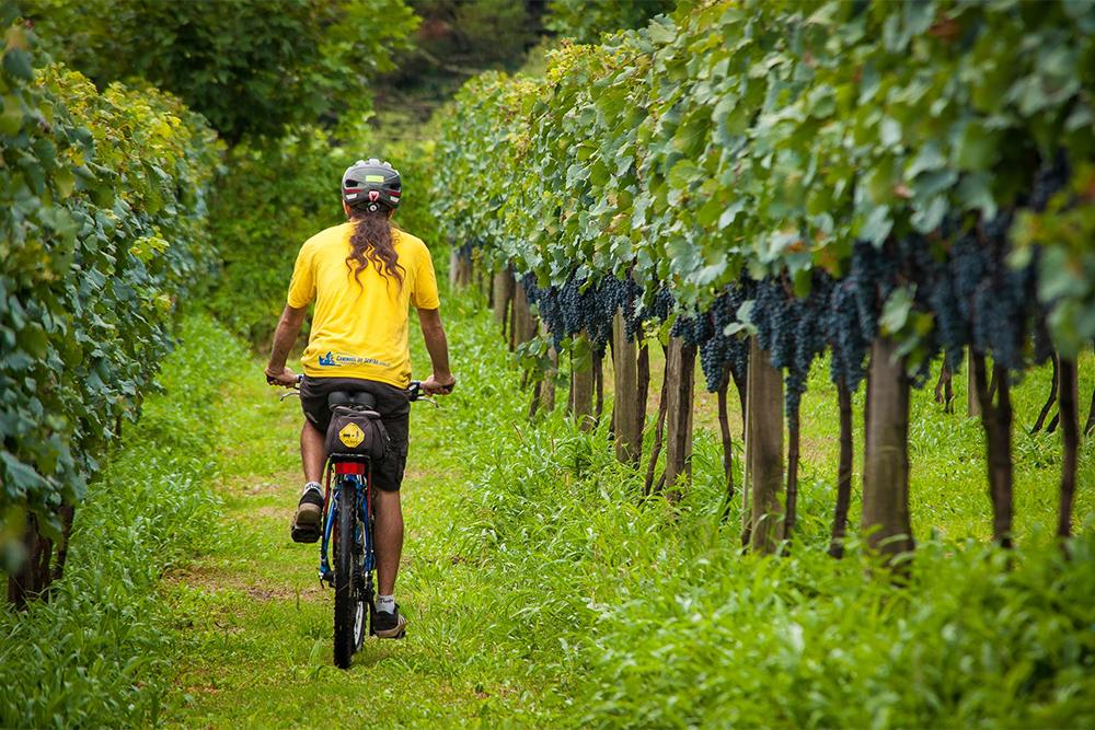 Roteiros de bike pela Serra Gaúcha