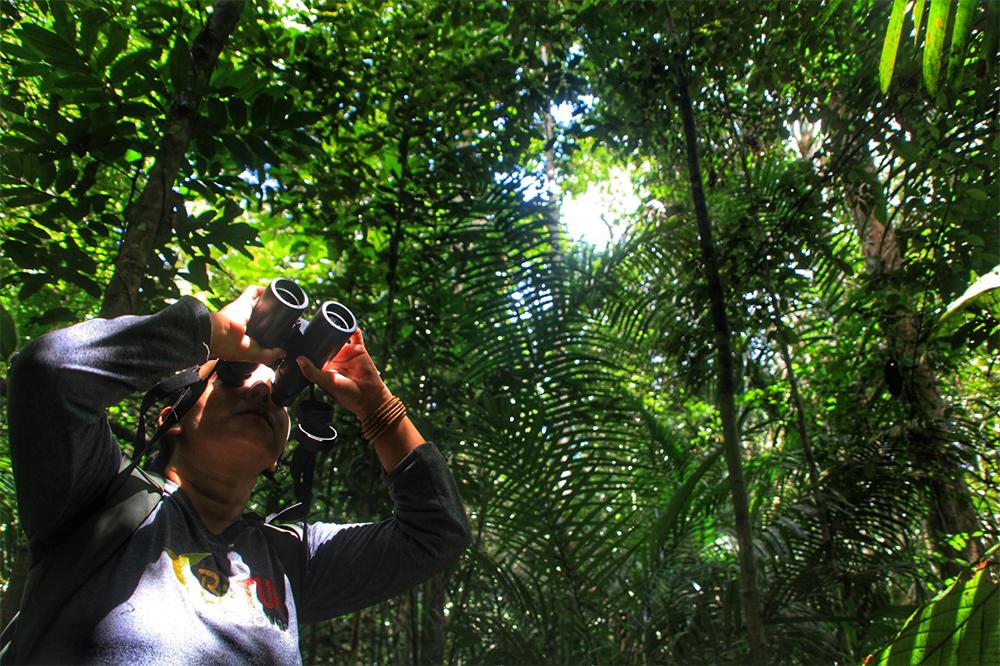 Birdwatching no Amazonas