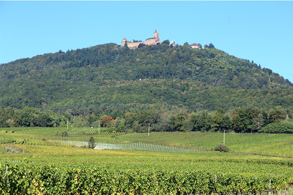 O castelo de Haut-Koenigsbourg, na Alsácia