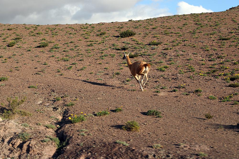 De Salta a Cafayate, Parque Nacional de los Cardonnes