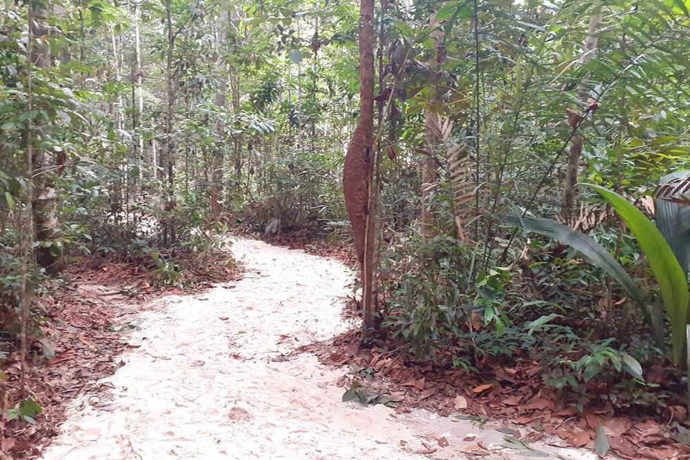 Museu da Amazônia inaugura nova trilha no aniversário de Manaus