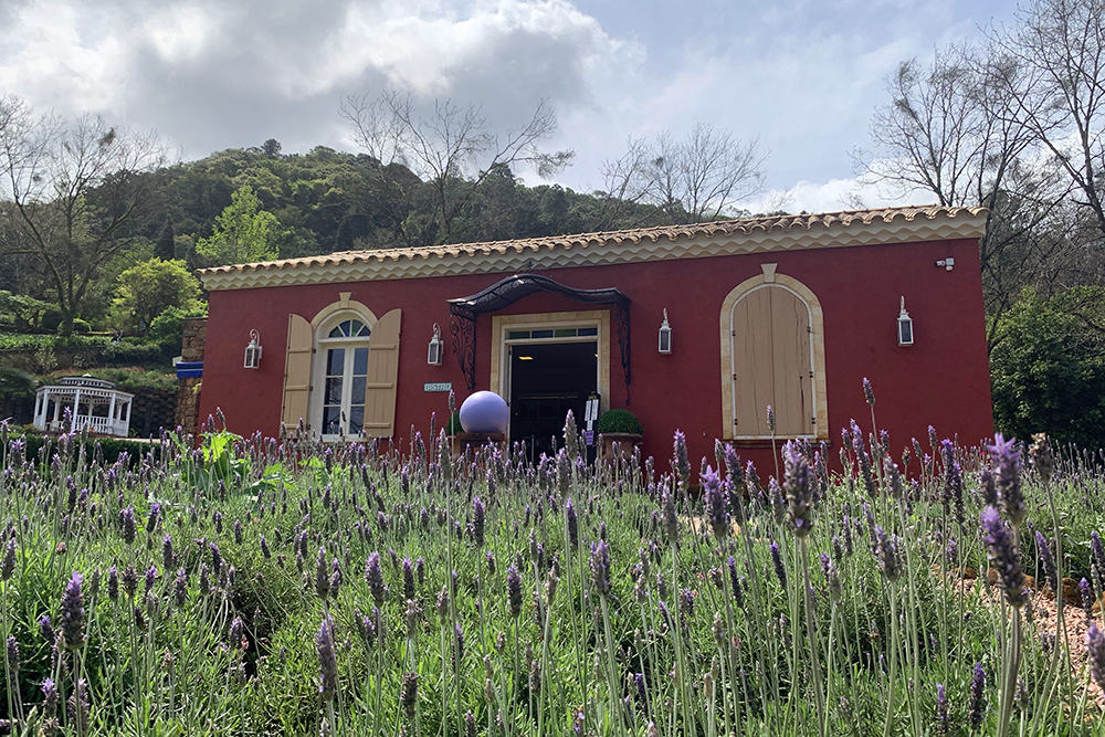 Le Jardin: a beleza das lavandas virá atração em Gramado